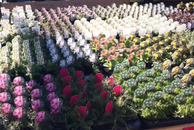Flower Cemetary