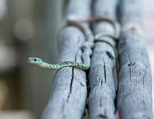snake-516507_640