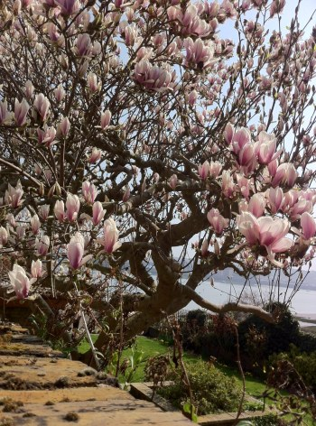 Blossom in Upnor